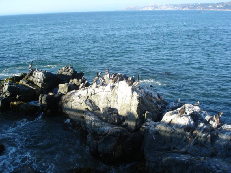 chile 2007 9 grande